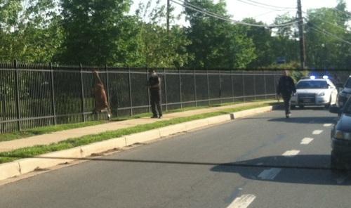 Deer_impaled_on_fence