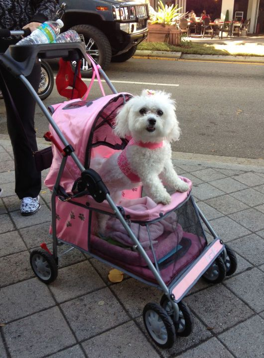 Dog Carriage