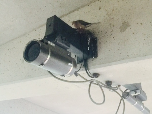 Birds Nest Surveillance.jpeg