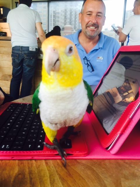 Computer Bird